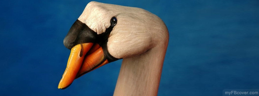 Duck Facebook Cover Timeline Fb Picture