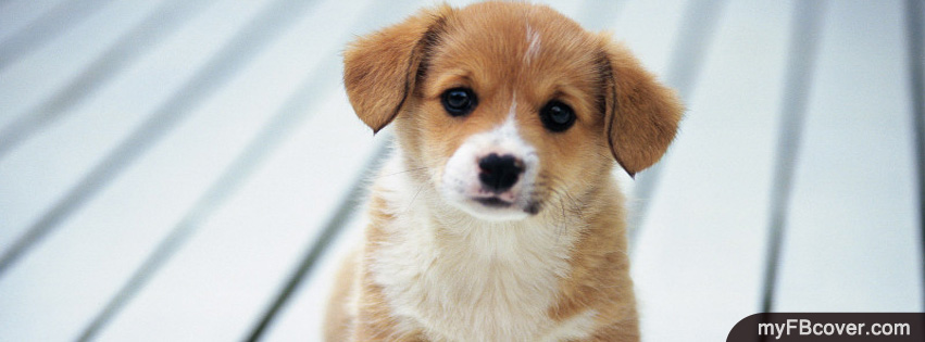Cute Puppy Facebook Covers | Timeline Covers | FB Covers