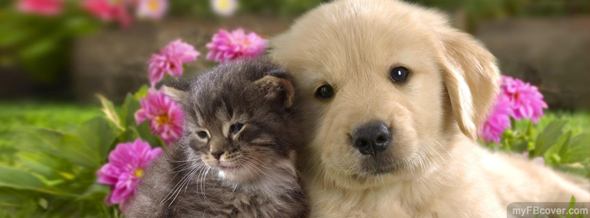 Cute Puppy and Kitten Facebook Covers | Timeline Covers | FB Covers