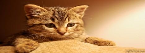 خلفيات فيسبوك حيوانات أليفه 2012,
